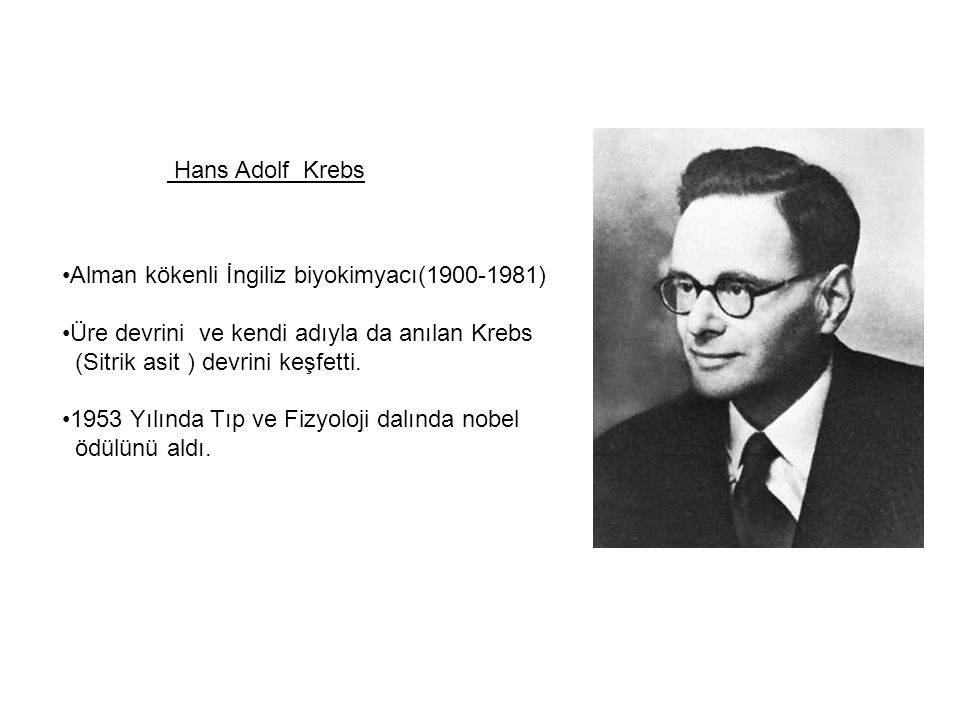 Ханс адольф кребс - вики