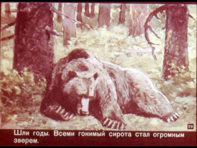 Медведь: описание, повадки, что есть, где живет, видео, фото