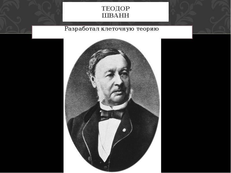Шванн, теодор — википедия. что такое шванн, теодор