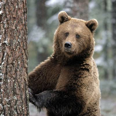 Медведь, александр васильевич