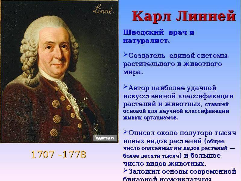 Карл линней: краткая биография и научная деятельность, вклад в биологию и научные публикации | tvercult.ru