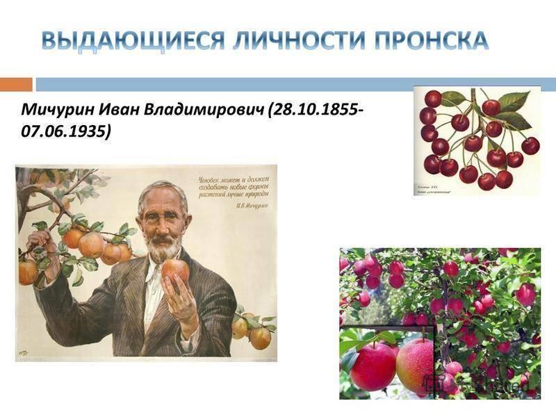 Иван владимирович мичурин - биография и семья
