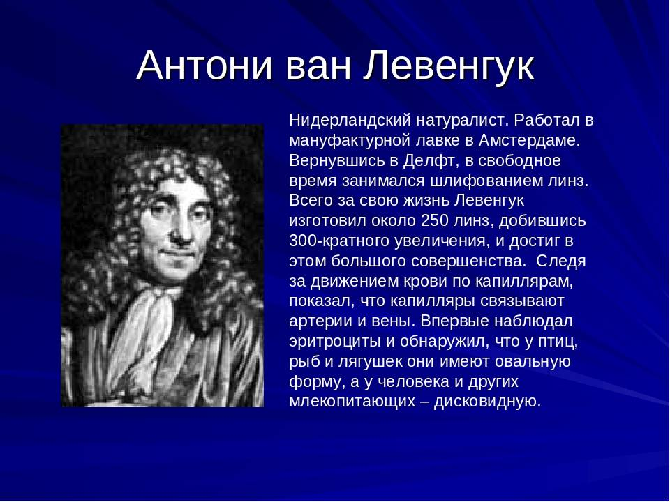 Антони левенгук: биография, интересные факты, видео