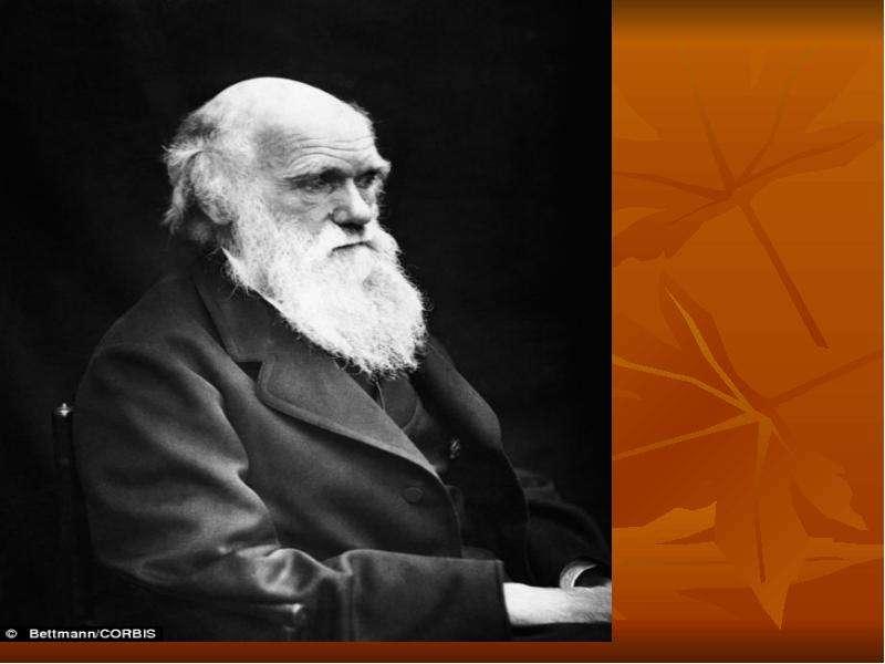 Чарльз дарвин: биография, кто такой и что сделал — годы жизни, труды и цитаты ученого и биолога — perstni.com