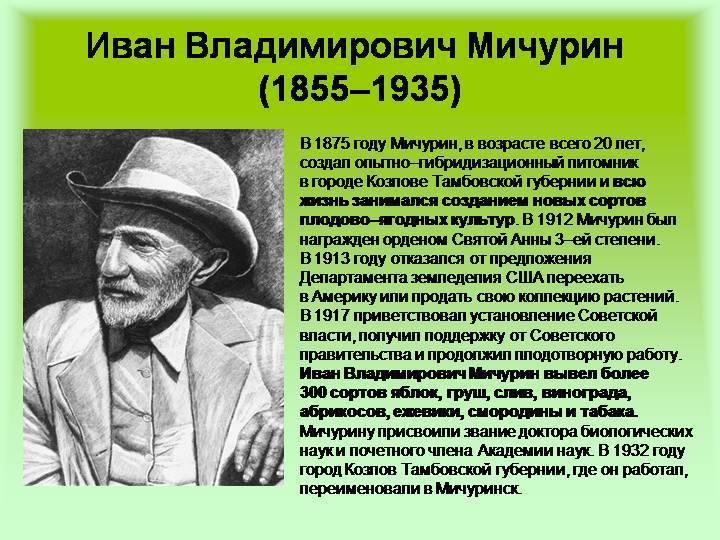 Иван владимирович мичурин — краткая биография   краткие биографии