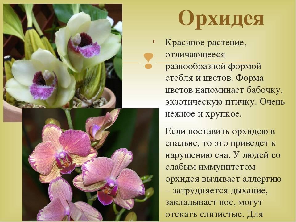 Сорта фаленопсисов: анна лоретти, арлекин и афродита, каждая орхидея с фото