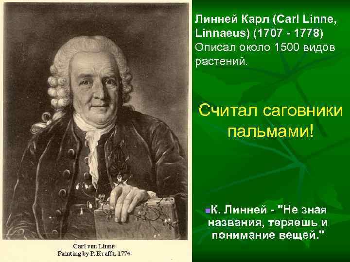 Биография карла линнея. вклад карла линнея в науку