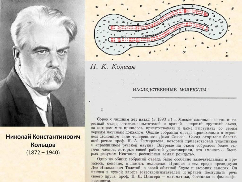 Wikizero - кольцов, николай константинович