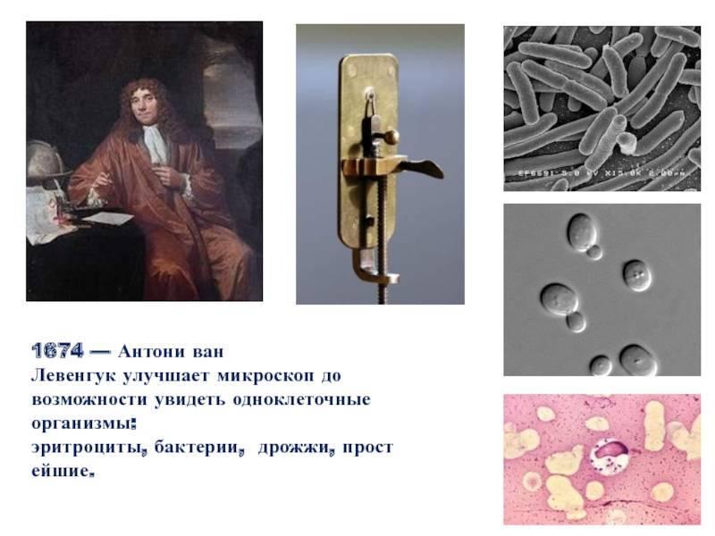 Левенгук антони ван - вики