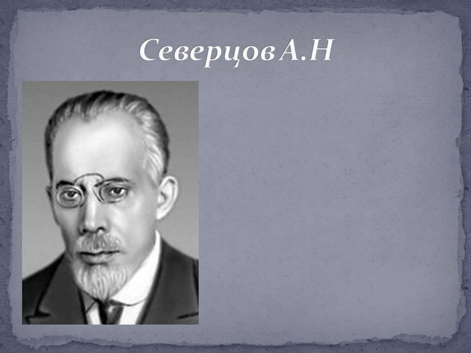 Северцов, алексей николаевич