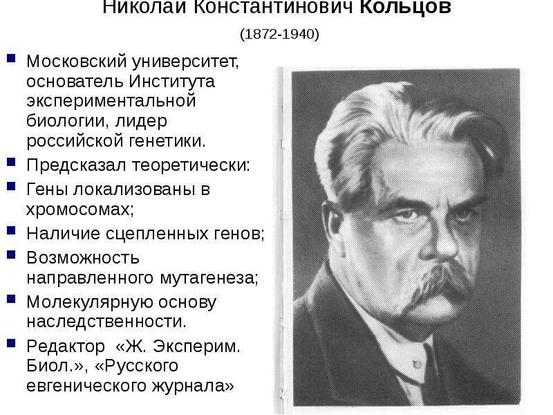 Кольцов, николай константинович