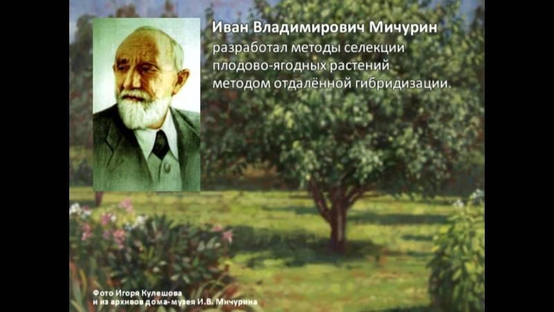 Создатель райского сада: иван владимирович мичурин. биография.