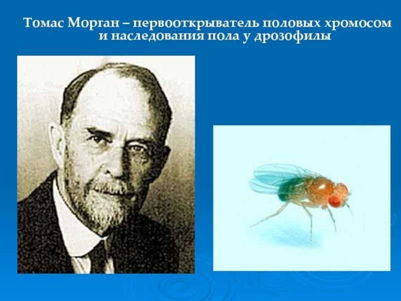 Династия морганов: история возникновения, интересные факты, жизненный путь