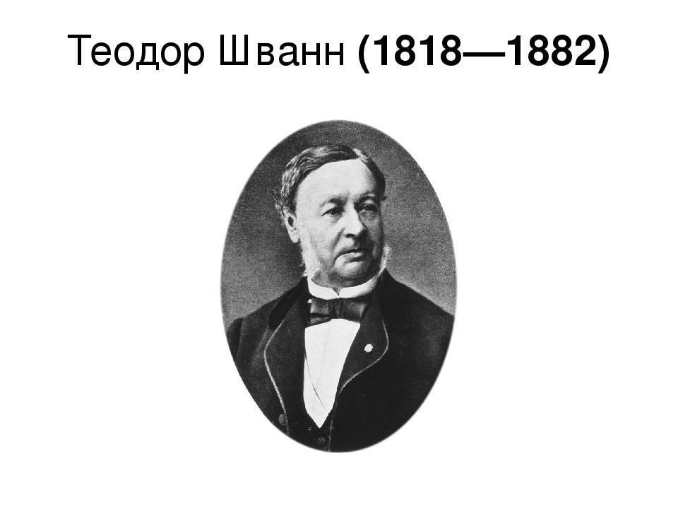 Шванн биография кратко. биография теодора шванна (theodor schwann). теодор шванн вклад в биологию