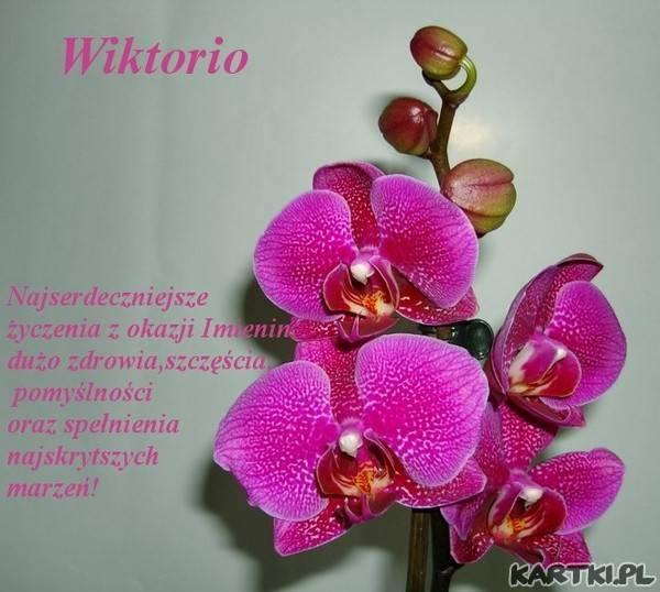 Орхидея фронтера: фото яркого фаленопсиса, описание бутонов и отличительных признаков растения, а также период цветения