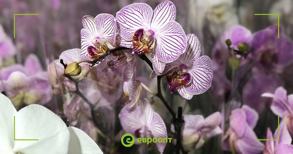 Необычные орхидеи: описание и фото растений с цветками оригинальной формы selo.guru — интернет портал о сельском хозяйстве