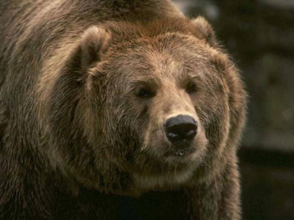 Медведь, александр васильевич — википедия