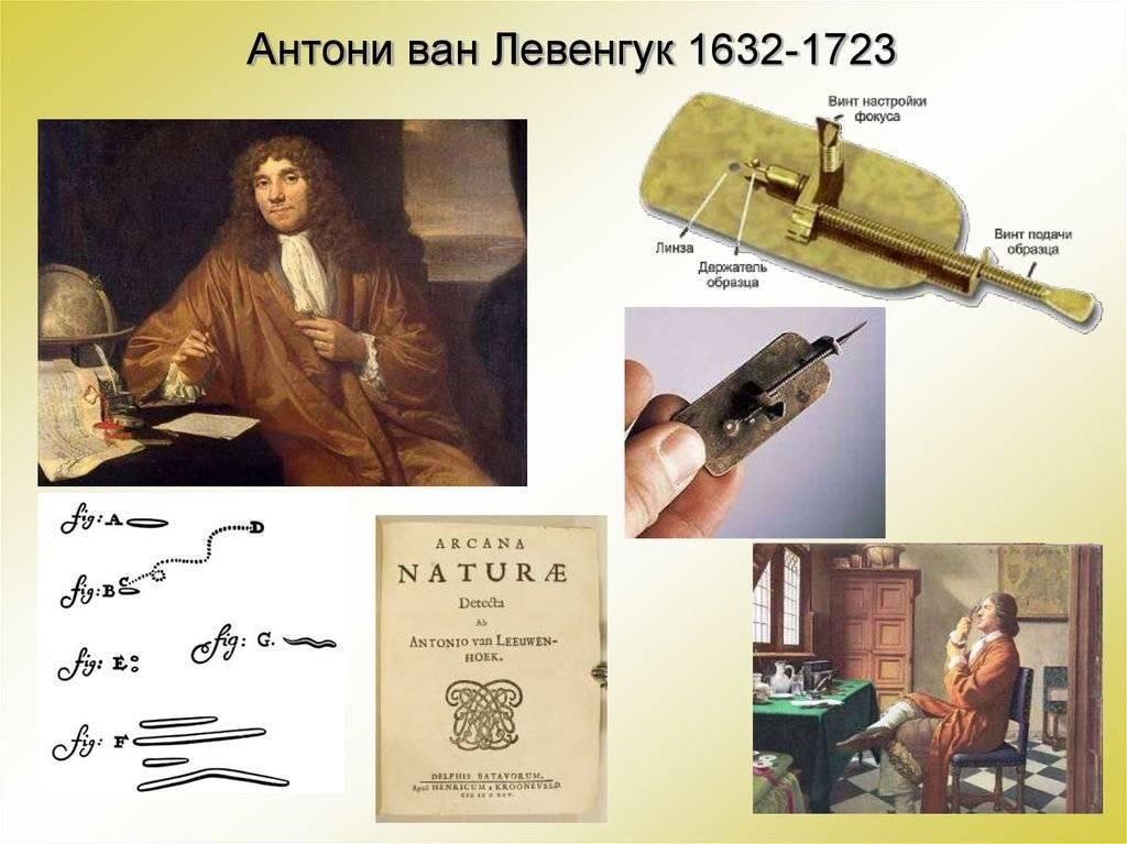 История развития микробиологии. антони ван левенгук. реферат. биология. 2015-10-28