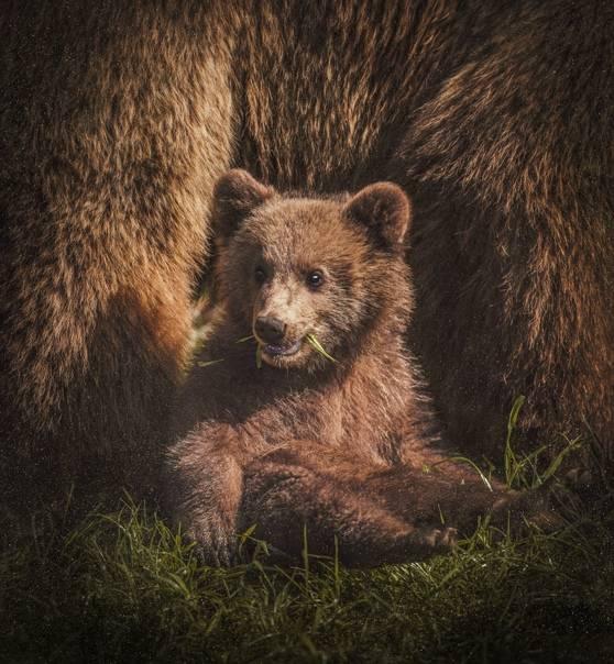 Медведь александр васильевич - вики