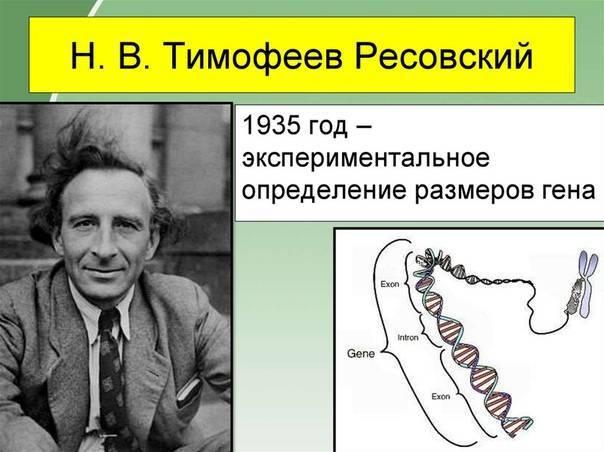 Тимофеев-ресовский, николай владимирович