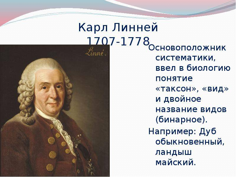 Биография карла линнея презентация, доклад, проект
