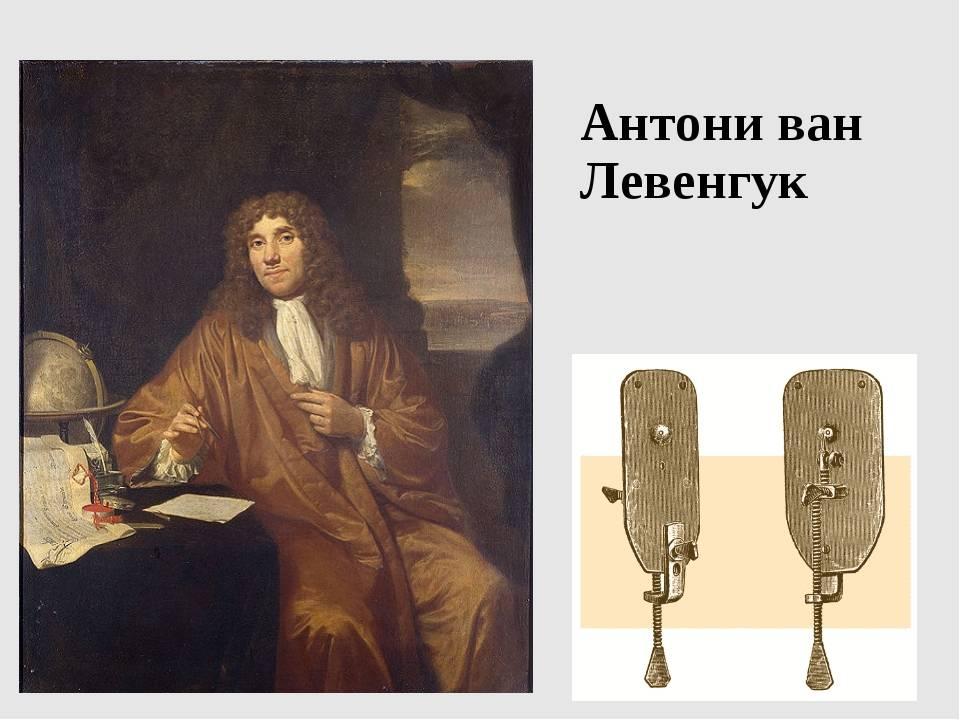 Антони ван левенгук: биография, вклад в биологию, открытие микроскопа