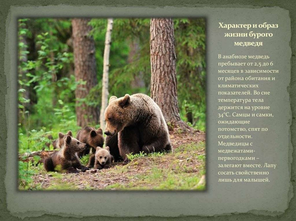 Медведь, александр васильевич - вики