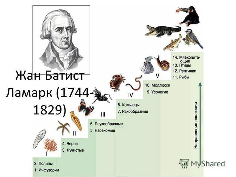 Теория ламарка и постулаты эволюции