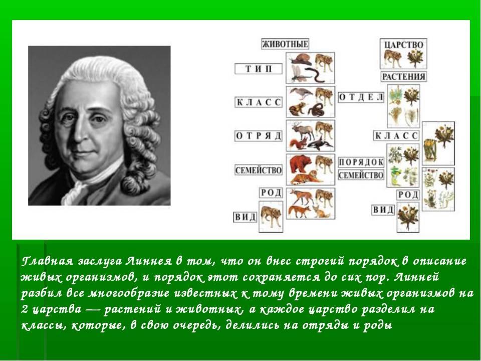 Линней, карл — творениявики, энциклопедия науки о сотворении