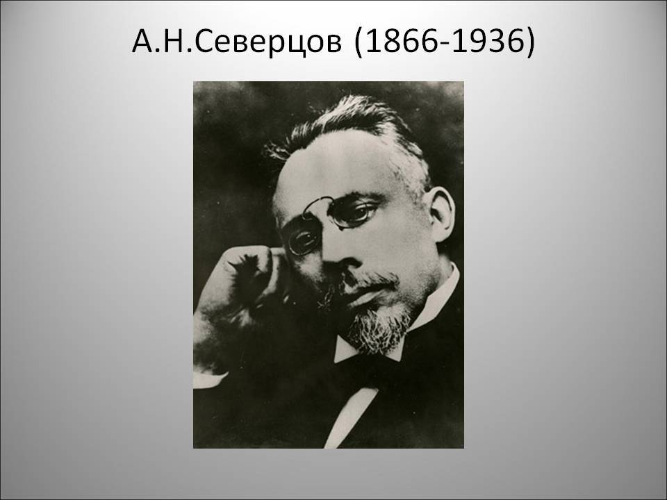 Северцов, алексей николаевич - вики