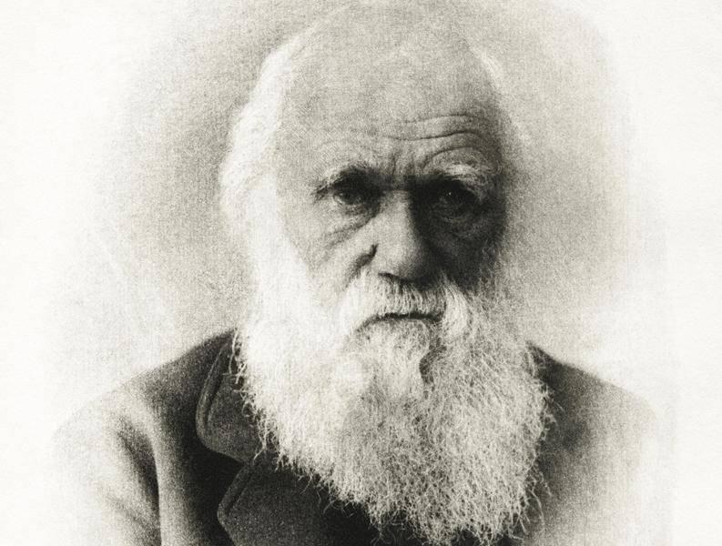 Ученый чарльз дарвин: биография, теории и открытия. чарльз дарвин: краткая биография