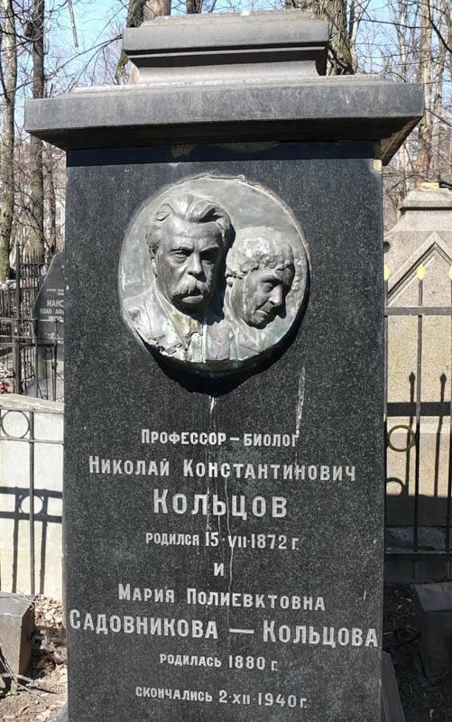 Кольцов, николай константинович - вики