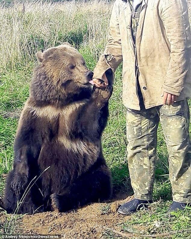 Три олимпиады александра медведя. 100 великих спортивных достижений