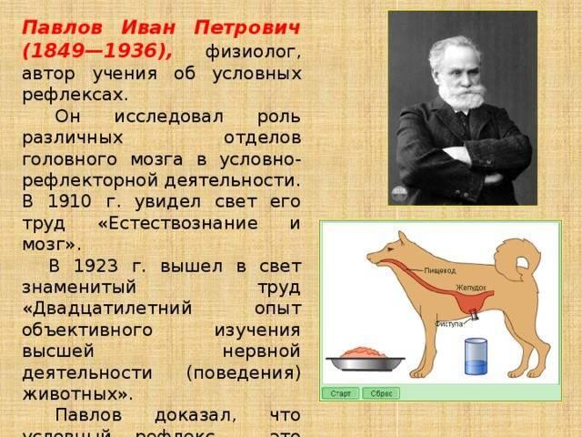 Иван павлов – биография, фото, личная жизнь, наука и вклад - 24сми