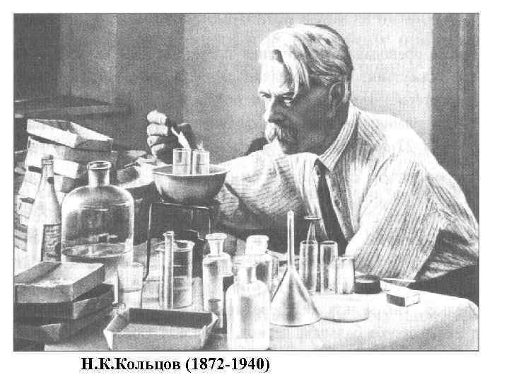 Биография алексей васильевича кольцова - известного русского поэта