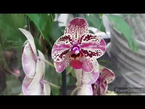История орхидеи - интересные факты - herbgid.ru