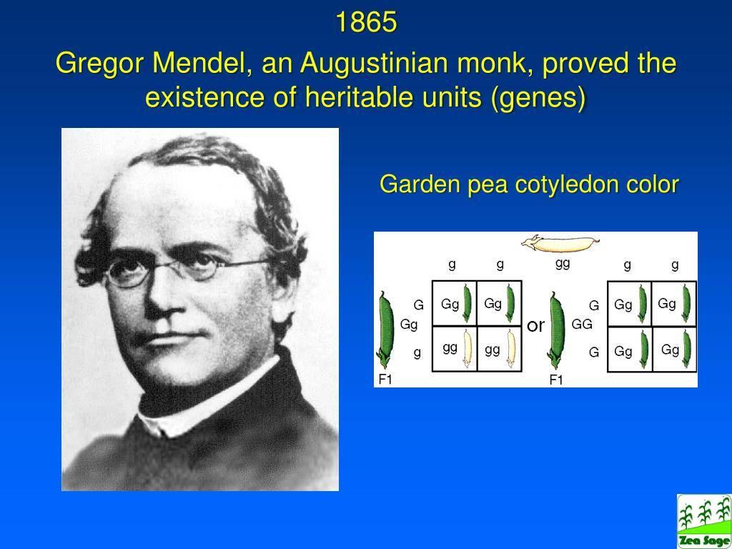 Мендель, грегор иоганн — википедия