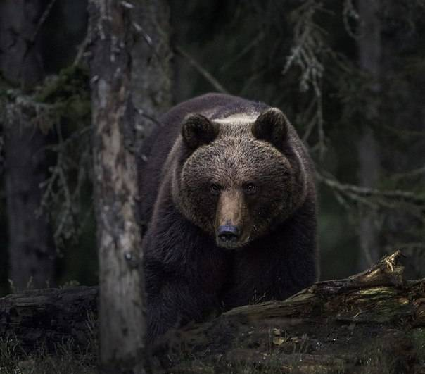 Александр медведь - вики