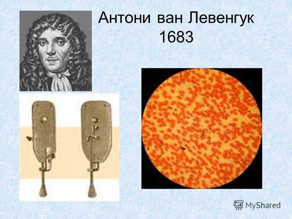 Левенгук, антони - вики