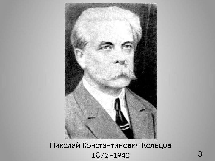 Кириллица  | антропотехника: как ученый николай кольцов создавал сверхчеловека