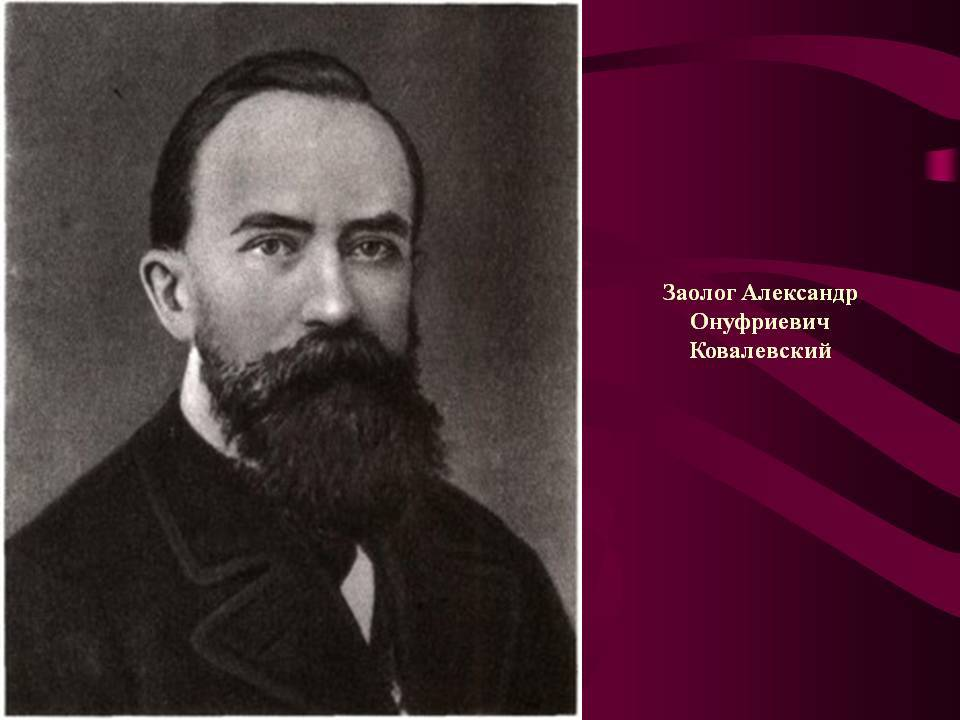 Его научные открытия не уступали достижениям дарвина и линнея: 180 лет назад родился русский ученый александр ковалевский