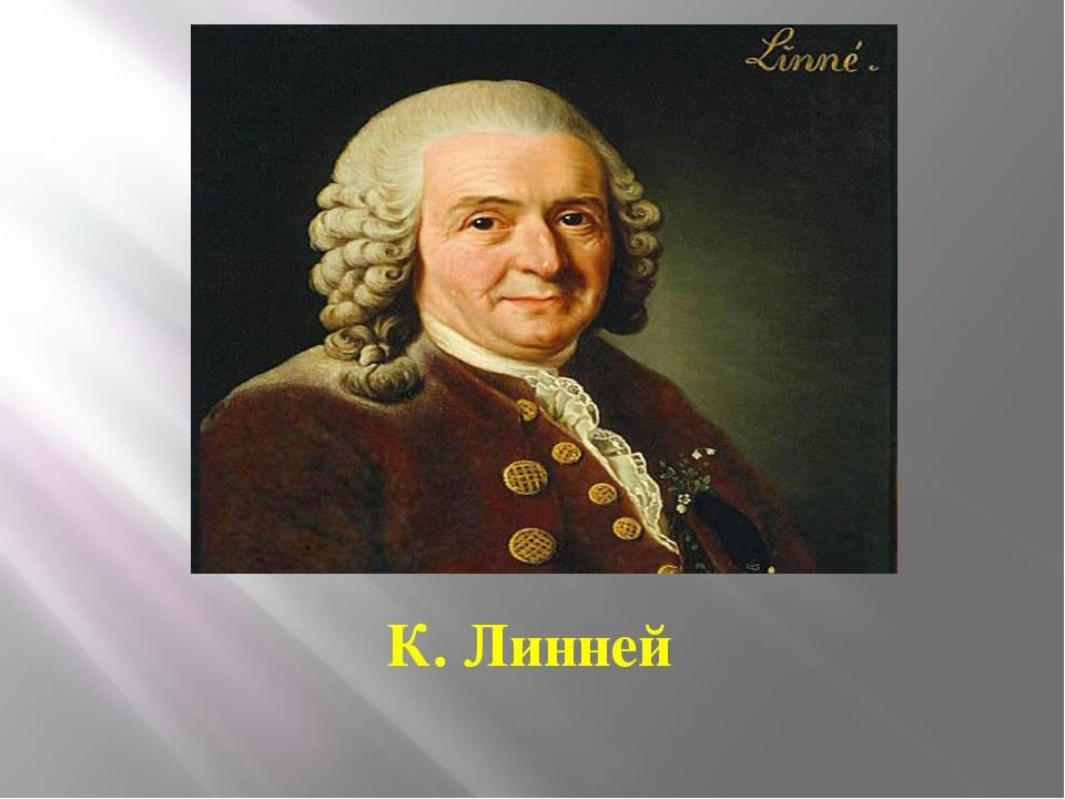 Карл линней — краткая биография ученого